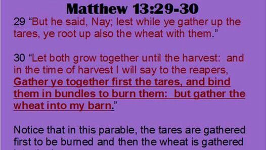 grow-together-tares-wheat