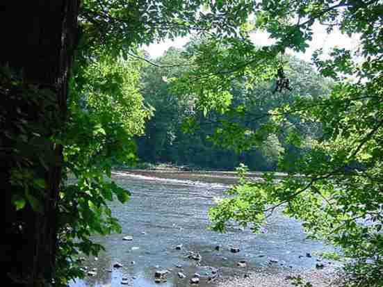 tree-trunk-rapids